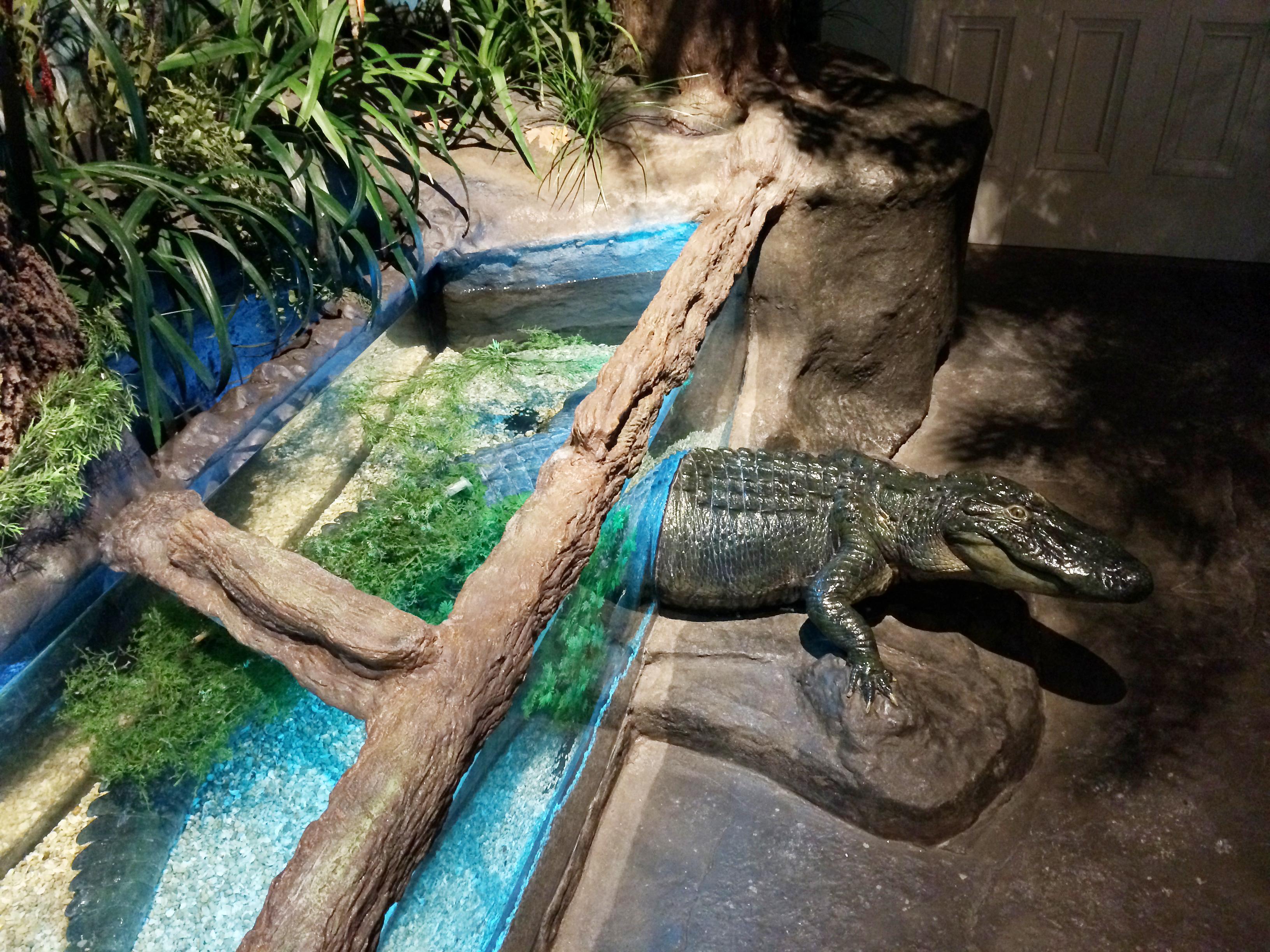 Audubon Aquarium of the Americas - New Orleans, LA - Ocean ...